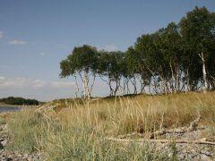 Соловецкие острова – край танцующих берёз, можжевельника и ягод