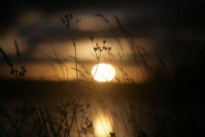 Эффектно смотрятся чуть колышащиеся на ветерке травинки, на фоне заходящего солнца