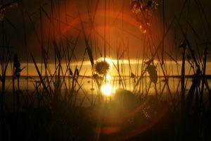 Серебряные травы, золотое солнце