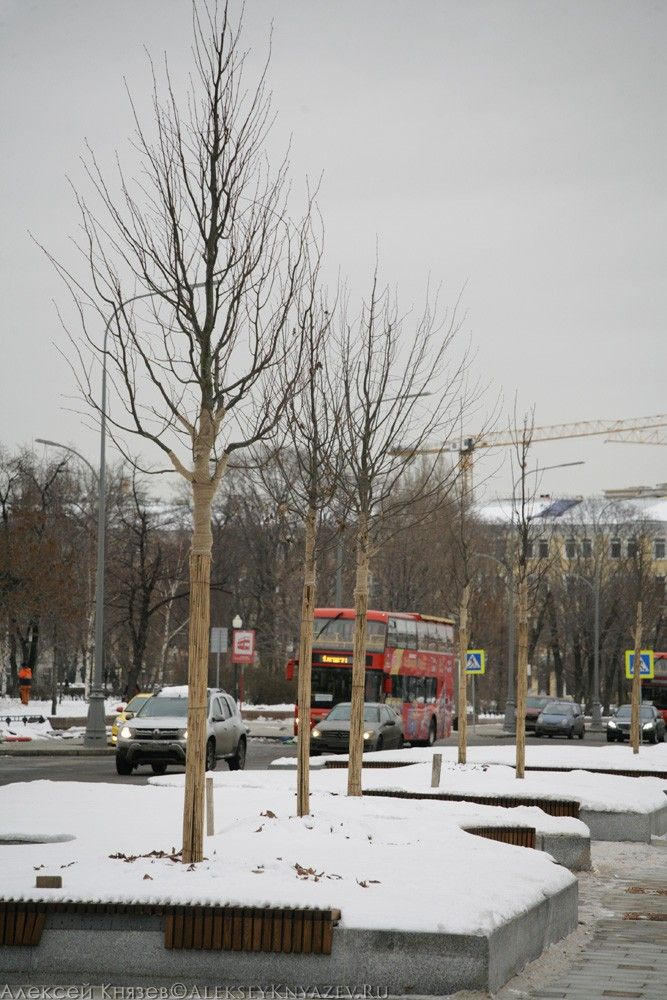Деревья теперь утепляют на зиму
