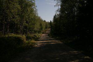 Дорога на Белужий мыс