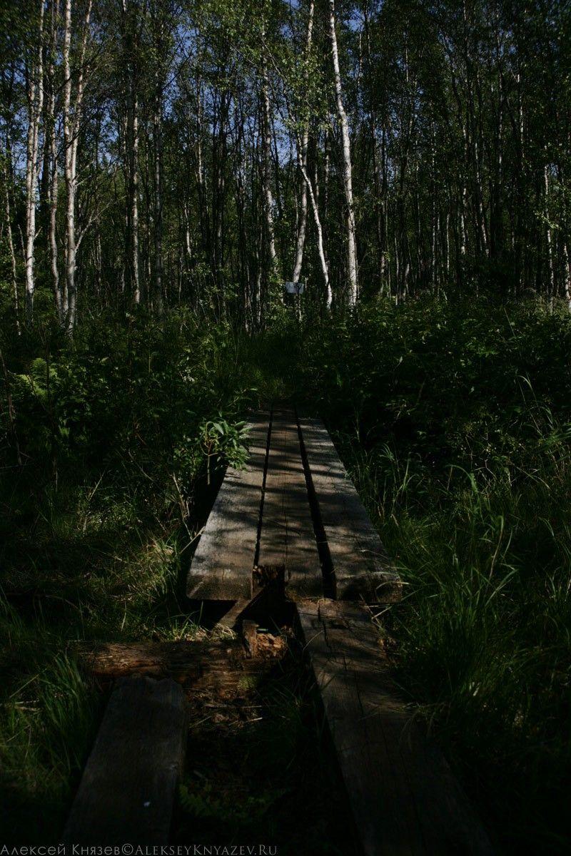 Досчастый настил по заболоченному лесу