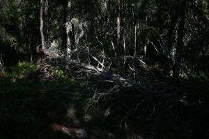 Упавшие деревья преграждают путь не раз