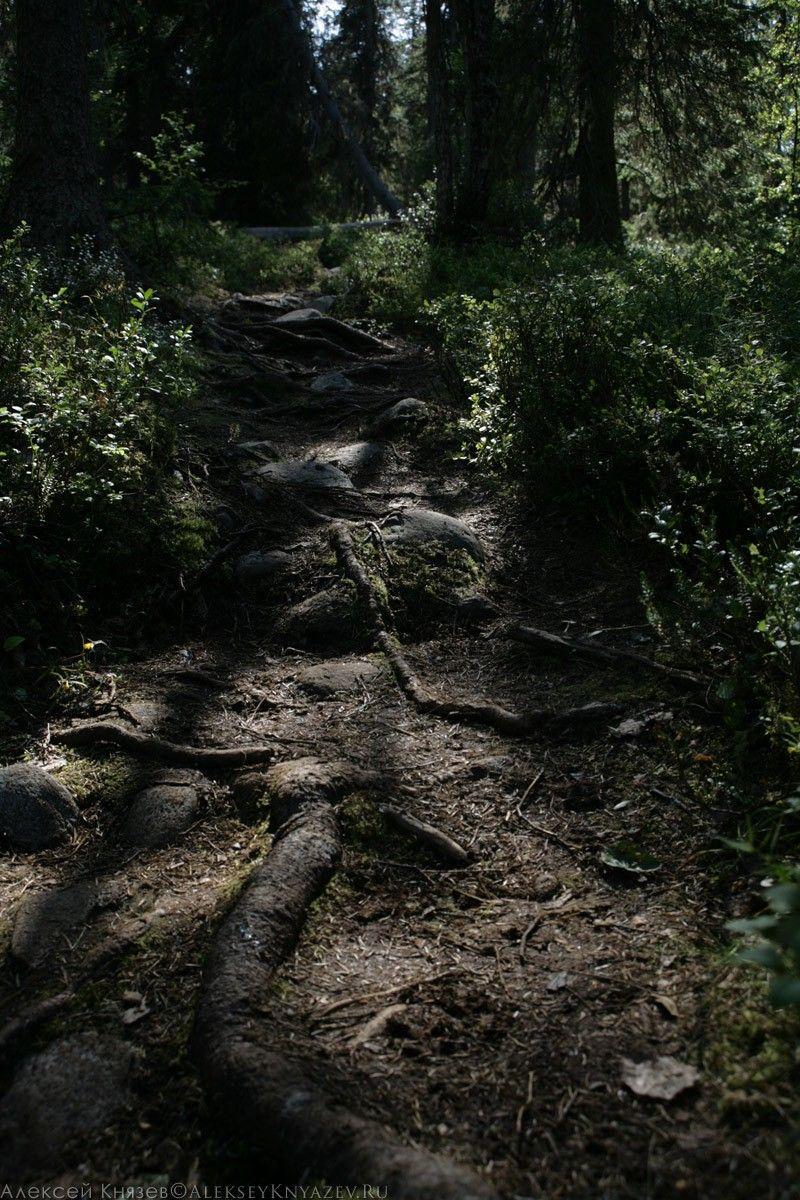 Переплетающиеся корни и камни