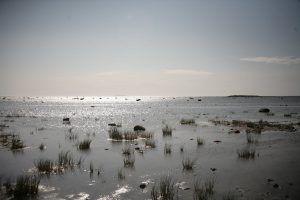 Белое море - вид с Белужьего мыса