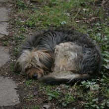 Жил-был пёс. Глава шестнадцатая.
