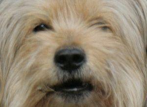 Жил-был пёс. Глава семнадцатая.